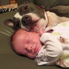 pets-family-friend-newborn-baby-sonny-9