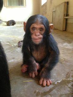 Baby Thabu, Chimp Eden, SA