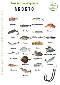 Seasonal fish in August Paleo Pumpkin Cookies, Fish Chart, Seafood Recipes, Cooking Recipes, Food Inc, Nutrition Chart, Food Nutrition, Kunst Poster, In Season Produce