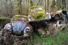 Old Abandoned, Volkswagen Beetles Abandoned Cars, Abandoned Buildings, Abandoned Places, Abandoned Vehicles, Vw Camping, Kdf Wagen, Vw Vintage, Rusty Cars, Vw Cars