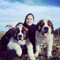 Mis bellos sobrinos ♥ #Zeus & #Alim #campo #Sanbernardos #pequeñasbestias  Recien tienen 3 meses.