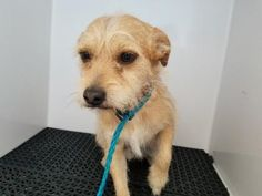 35602515 located in El Paso, TX has 9 days Left to Live. Adopt him now!