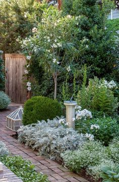 More from Tone on Tone: a perfect little border garden (and boxwoods!) (Southern Living with photo by Helen Norman)silver and green & white, my favorite