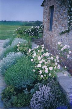 Herbs planted with roses - I would love to live in a place like this