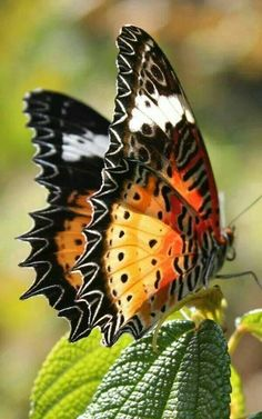 What is the comprehensive Encyclopedia of Insects ? Butterfly Kisses, Butterfly Flowers, Butterfly Wings, Peacock Butterfly, Monarch Butterfly, Butterfly Pupa, Pink Flowers, Flying Flowers, Butterflies Flying
