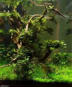 Favourites: 'Midday' by Alexander Maletin This shrimp tank was presented at the DENNERLE Scaper's Tank 2014