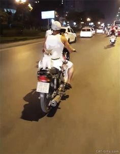 Crazy CAT GIF • OMG  4 Cats ride alongside motorcyclist down main street