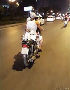 Crazy CAT GIF • OMG 4 Cats ride alongside motorcyclist down main street