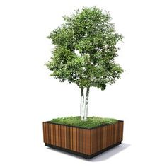 giant planters for trees - Google Search