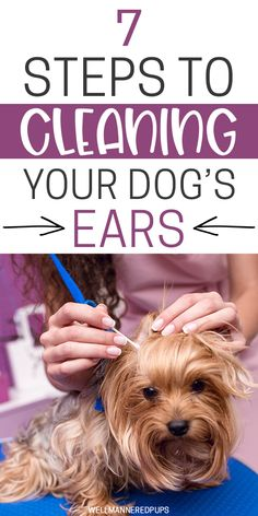 Ensure your dog's general great health by only feeding it quality and healthy pet food. But just what makes for the very best canine food? Cleaning Dogs Ears, Teeth Cleaning, Puppy Care, Pet Care, Every Dog Breed, Shih Poo, Dog Grooming Tips, Huge Dogs, Yorkie Puppy