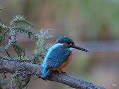 野鳥の話題 Wild Birds - 社群 - Google+