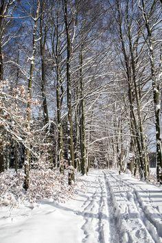 Im Januar 2017 zeigte sich im Rabensteiner Wald, welcher sich im Westen von Chemnitz erstreckt, nach starken Schneefällen und beständigem Frost eine herrliche Winterlandschaft. Der Wald nördlich des Ortsteils Grüna bietet neben Sagen um verwunschene Prinzen und sorbische Schätze sowie dem alljährlich stattfindenden Mountainbike-Rennen #Heavy24 allerlei hübsche Flecken für das eine oder andere Fotomotiv. #Chemnitz #Grüna #Erzgebirgsvorland #wandern #Mountainbike #MTB #wood #hiking #forest…