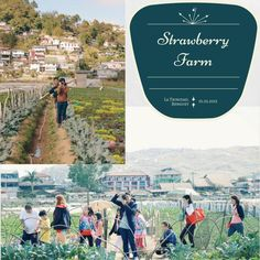 Strawberry Farm, Baguio City, Philippines Strawberry Farm, Baguio City, Philippines, Projects, Instagram, Log Projects, Blue Prints