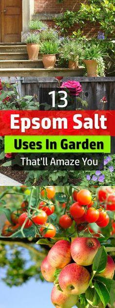 Diejenigen, die es verwenden, schwören, dass mit Bittersalz auf Pflanzen machen sie üppig und gesünder.  Finden Sie heraus, sich selbst, sehen diese 13 Bittersalz im Garten verwendet.