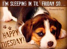 Happy Wacky Tuesday | Happy Tuesday
