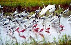Ilha do Caju - Maranhão - Pesquisa Google