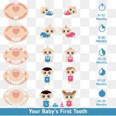 OS dentes do bebê DOS desenhos animados, Bela Expressão, Dentes Do Bebé, A Educação PNG e Vector