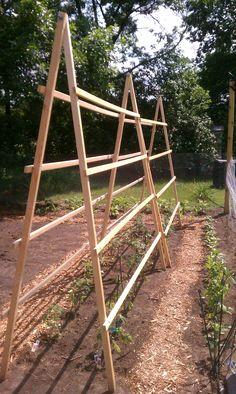 tomato trellis I built...