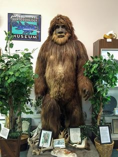 The International Cryptozoology Museum in downtown Portland, Maine, houses a fascinating collection of mysterious creatures of legend and lore. Founded in 2003 by respected author and researcher Lo...