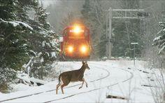 Nobember, Dioritem Michigan by Dean #Sauvola - #photo #art #artwit #twitart #snow #winter #train #locomotive ____