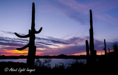 Southwest Collection - About Light Images Saguaro Cactus and lake at sunset.