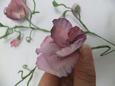Fold the petals open to shape the sweet pea
