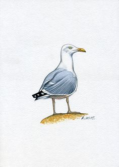 Seagull, sea, ocean, Birds, Watercolor Original Painting Art, Quick sketch  #Realism  Natalia Komisarova    NatalieStorePainting      You can also find me on:    EBAY: http://stores.ebay.com/NatalieStorePainting    ETSY: https://www.etsy.com/shop/NatalieStorePainting    FACEBOOK: https://www.facebook.com/komisarova.art    #NataliePaintings #NatalieStorePainting #Natalie #Artist #Birds #Watercolor