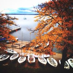 Fall colors Lake Mendota. UW Madison. University of Wisconsin.  Photo cred:  minimad_uw on Instagram
