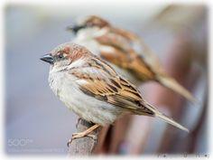 Birds by BeaHer via http://ift.tt/2mEFc5j