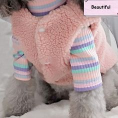 Chihuahua Puppies, Baby Puppies, Pet Puppy, Pet Dogs, Pets, Dog Vest, Dog Jacket, Dog Hoodie, Yorkie Clothes