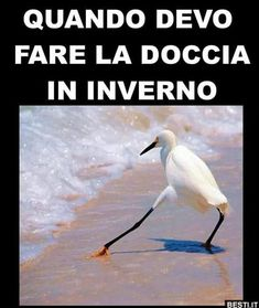 La doccia in inverno | BESTI.it - immagini divertenti, foto, barzellette, video Wtf Funny, Funny Cute, Funny Jokes, Hilarious, Melanie Martinez, Funny Animal Memes, Funny Animals, Funny Images, Funny Photos