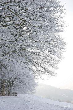 Pure White St. Gallen, Schweiz/Switzerland
