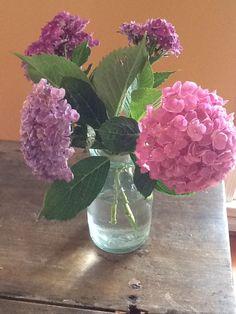 Hydrangeas in a primitive ball jar...