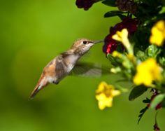 Making a Hummingbird