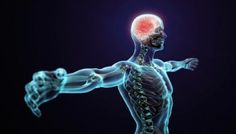 Fibromyalgia and chronic pain now considered as a lifelong central nervous system disorder