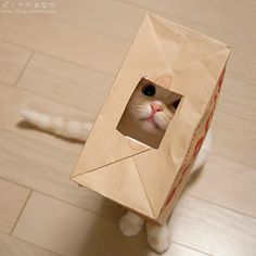 aww someone help get the cat outta the bag!