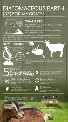 Diatomaceous Earth for Goats? With so many harsh dewormers on the market, many goat owners have begun looking for alternative methods to deworm their animals. One of the most popular and effective methods for naturally deworming goats is Diatomaceous Earth (DE). Check out the infographic below to learn more about Diatomaceous Earth for deworming your goats.
