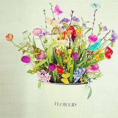 Spring Flowers~