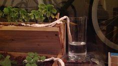 * Oder einfach nur faul.  Schieben Sie ein fest gewalztes Papiertuch in den Boden und legen Sie das restliche Ende in ein Glas Wasser ab.