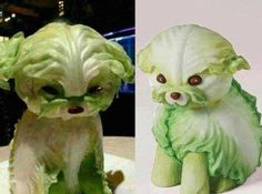 Oh my this is exactly the dog I want...in lettuce form