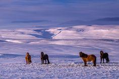 Lost in Iceland by DanielHerr #animals #animal #pet #pets #animales #animallovers #photooftheday #amazing #picoftheday