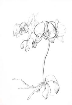 The gallery for --> Orchid Drawing Black And White