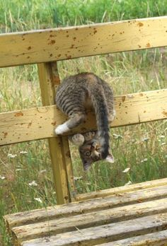 Cats Who Like Chasing Their Own Tail [VIDEO Chasing ones tail isnt just limited to dogs here some cats who like chasing their tails too! The post Cats Who Like Chasing Their Own Tail [VIDEO appeared first on Katzen. Cute Kittens, Cats And Kittens, Animals And Pets, Funny Animals, Cute Animals, Farm Animals, Crazy Cat Lady, Crazy Cats, Mundo Animal