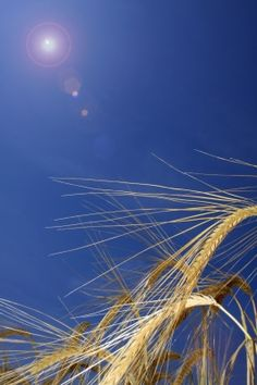 Grain Brain: Dr Perlmutter on the scope of gluten sensitivity and brain health.