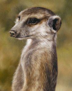 Meerkat oil painting by Sarah Stribbling