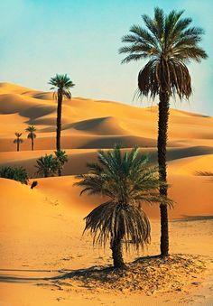 Sahara Desert palmtrees (Morocco) #morocco #sahara #desert Maroc Désert Expérience tours http://www.marocdesertexperience.com