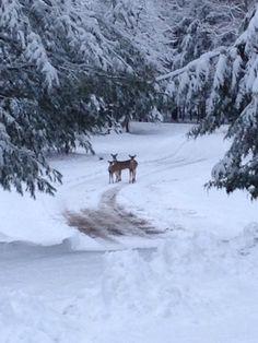 Deer near Harbor Springs, Michigan Charlevoix Michigan, Running Away, Beautiful Places, United States, Cold, Park, Nature, Deer, Brain