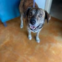 Austin Animal Center In Austin Texas In 2020 Animals Save A Dog Kitten Adoption