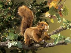 Squirrel by Folkmanis puppet can be found at Wild Birds Unlimited, Surrey, BC