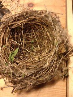 Welcoming nest